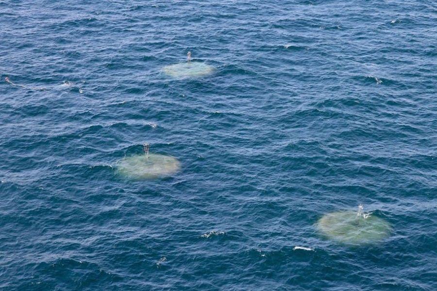 UACh integra Consorcio Australiano Blue Economy CRC que abordará la economía sustentable en el mar