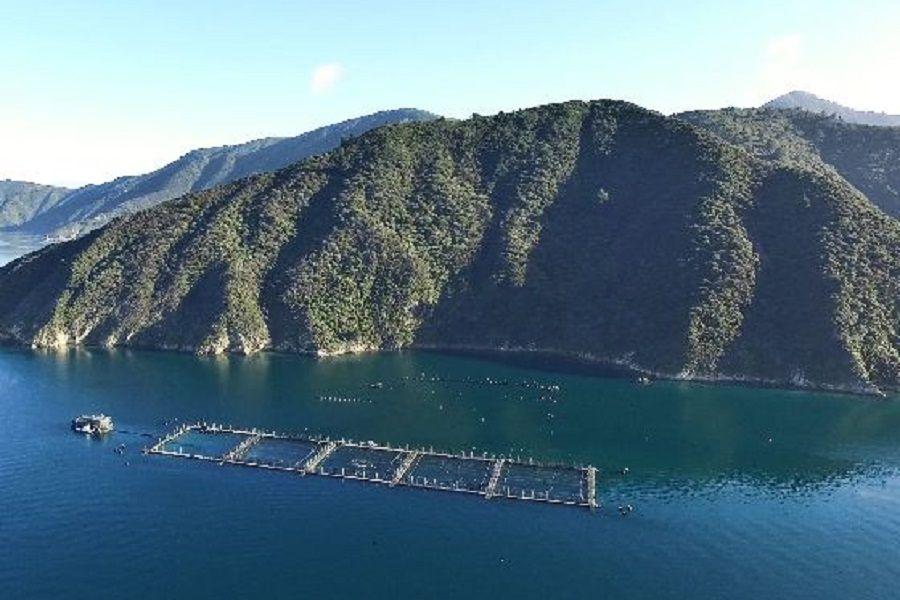 Hundimiento del centro Caicura: las regulaciones pendientes de la acuicultura